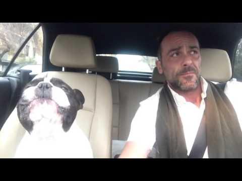 Walter og hunden synger duet i bilen :-)
